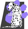 Dalmatian Breed of Dog clipart