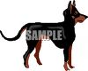 Doberman Pincer Breed Dog clipart