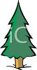 Fir Tree for a Christmas Tree clipart