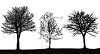 Silhouette of Three Trees in a Field clipart