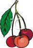Cherries on the Stem with a Leaf clipart