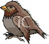 Little Brown Wren Bird clipart