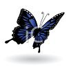 Realistic Blue and Black Butterfly clipart