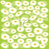 Field of Chamomile Flowers Background clipart