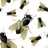 Fly Insect Background clipart