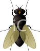 Cartoon Fly  clipart