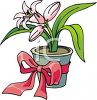 Easter Lily Growing in a Pot clipart