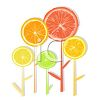 Good For You Citrus Fruit Sliced Forming Flowers clipart