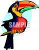 Cartoon of a Colorful Toucan clipart