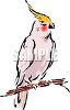 White Cockatoo clipart