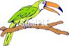 Toucan Sitting on a Branch clipart