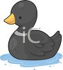 Little Black Duck clipart