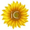 Yellow Daisy or Sunflower clipart