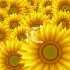 Field of Daisies or Sunflowers clipart