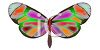 Pretty Moth or Butterfly with Colorful Wings clipart