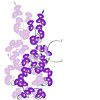 Vine of Purple Morning Glories clipart