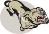 Vicious pit bull dog baring its teeth clipart