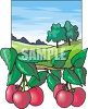 Apple Trees and Apples in an Orchard clipart
