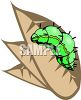 Caterpillar Crawling on a Leaf clipart