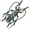 Creepy-Crawley little bug or beetle with long antenna clipart