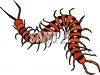 centipede or millipede insect clipart