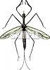 flying winged insect, perhaps a mosquito clipart