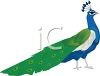 cartoon clip art of a peacock with his feathers down clipart
