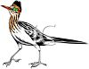 clip art illustration of a roadrunner clipart