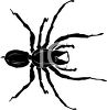 Illustration of a spider on a white background in a vector clip art illustration clipart