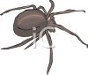 image of a spider in a gray scale in a vector clip art illustration clipart