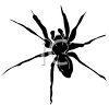 Picture of a black spider on a white background in a vector clip art illustration clipart