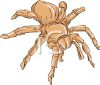 PIcture of a brown tarantula spider in a vector clip art illustration clipart