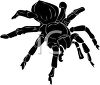 picture of a black tarantula in a vector clip art illustration clipart