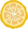 picture of a half of a grapefruit on a white background in a vector clip art illustration clipart