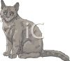 picture of a gray cat sitting looking at straight ahead in a vector clip art illustration clipart