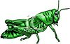 picture of a bright green grasshopper on a white background in a vector clip art illustration clipart