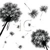 dandelion wishy blows in silhouette. make a wish clipart