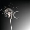 silhouette of a dandelion seeds flying free clipart