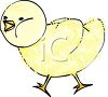 picture of a fuzzy baby chick walking and whisteling in a vector clip art illustration clipart