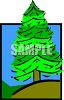 picture of an evergreen tree on a hill with blue skies in a vector clip art illustration clipart
