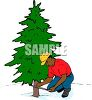 picture of a bushy pine tree with a man measuring  in a vector clip art illustration clipart