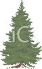 picture of a bushy pine tree in a vector clip art illustration clipart