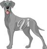 Picture of a grey colored great dane in a vector clip art illustration clipart
