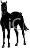 picture of a black stallion standing in a vector clip art illustration clipart
