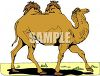 picture of a camel walking in a vector clip art illustration clipart
