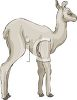 picture of a grey llama standing in a vector clip art illustration clipart