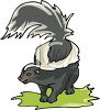 pictureof a skunk standing on grass with his tail up in a vector clip art illustration clipart