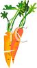 picture of fresh carrots in a vector clip art illustration clipart