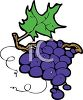 picture of purple grapes on a vine in a vector clip art illustration clipart
