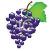 picture of a cluster of purple grapes in a vector clip art illustration clipart